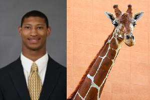 mattrogers-giraffe